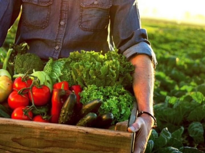 Organic food: What does it mean?