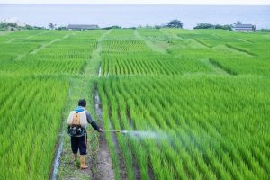 environmental pollution for pesticides